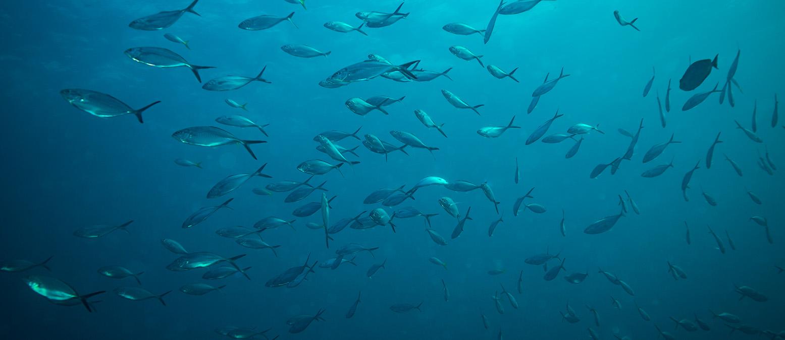 pesca sostenible en la segunda temporada de pesca
